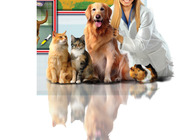Paws and Claws - Pet Vet Image