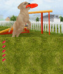 Petz Dogz Talent Show Image