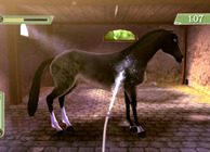 Petz Saddle Club Image
