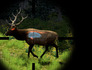 Cabela's Big Game Hunter 2010 Image