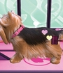 Barbie Groom and Glam Pups Image