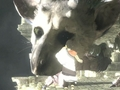 Hot_content_news-thelastguardian-1