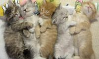 Article_list_kittens