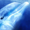 Ecco the Dolphin Screenshot - 1114779
