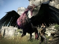Hot_content_news-dragonsdogma-bird