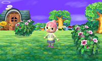 Article_list_news-animalcrossing-3ds