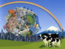 Katamari Damacy