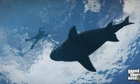 Article_list_gta_5_shark