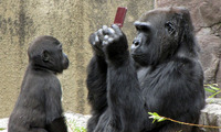Article_list_gorilla-playing-3ds