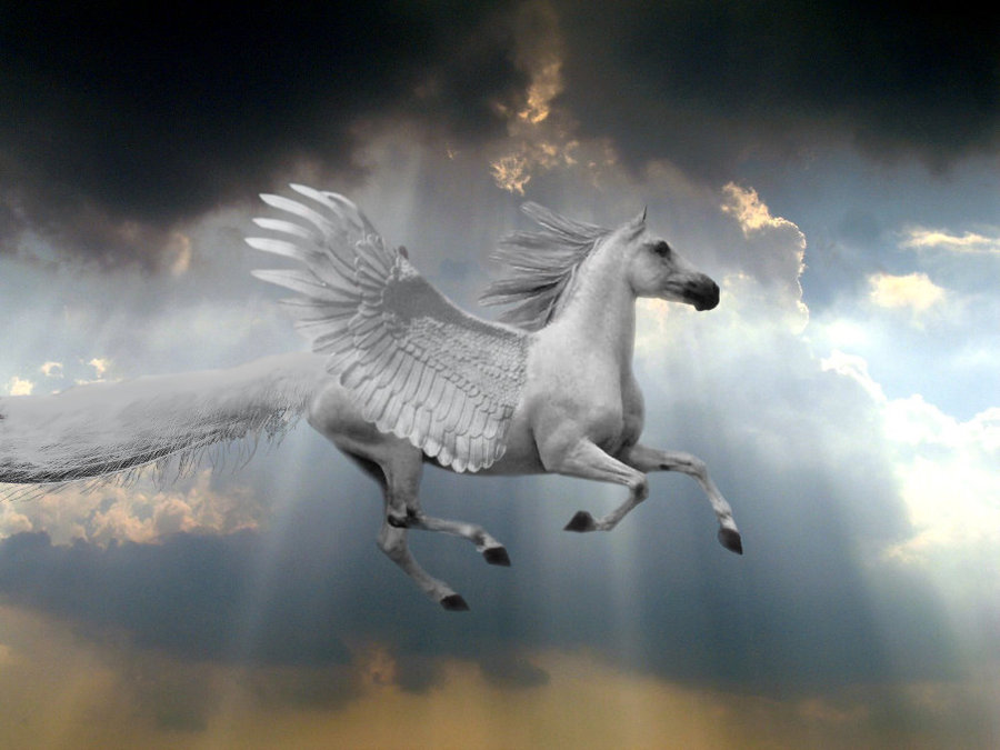 Pegasus Pokemon