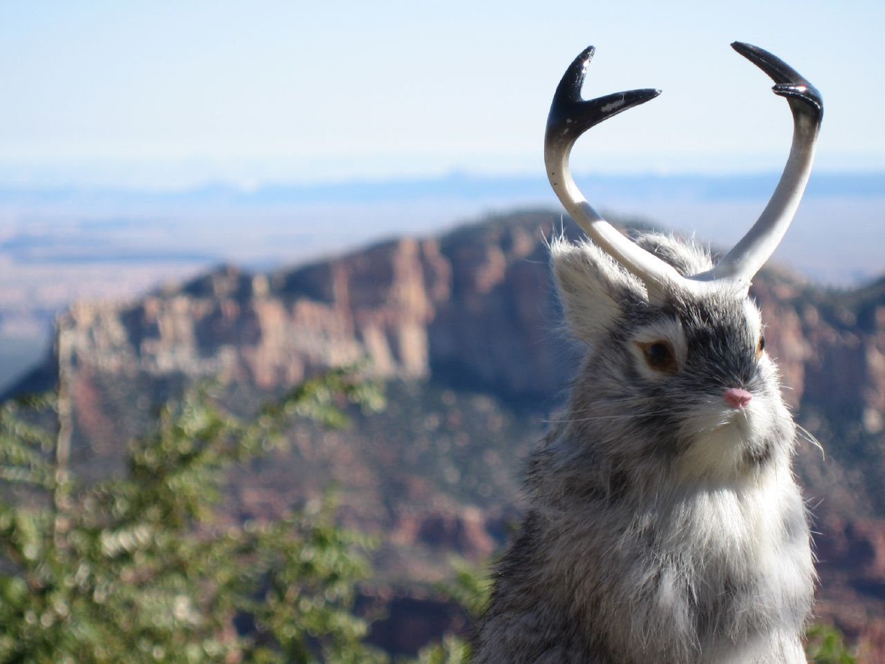 Jackalope Pokemon