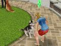 Hot_content_sims_freeplay_pet_paradise
