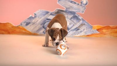 Puppies playing with Sphero's new BB-8 toy is the most adorable thing ever