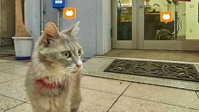 Japan creates a cat-eyed version of Google Street View