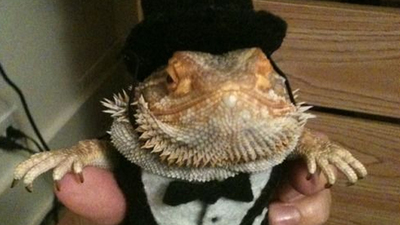 Lizard Squad joins in on the PSN, Xbox LIVE DDoS threats