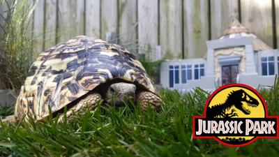 A real-life Jurassic Park has been built for a tortoise