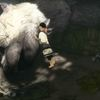 It looks like The Last Guardian has gotten a permanent price cut