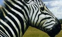 Article_list_01_zebra