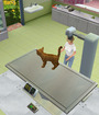 Animal Hospital: Pet Vet 3D Image