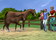 My Riding Stables Image