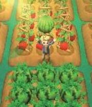 Harvest Moon: Connect to a New Land Boxart